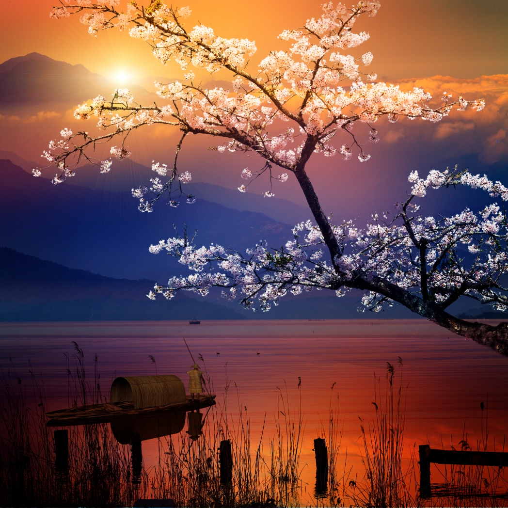 Cherry blossoms against a lake at sunset