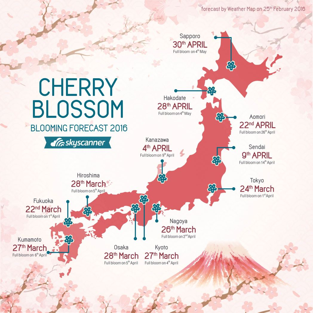 Cherry Blossom blooming forecast